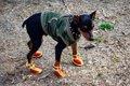 犬用靴を買う際に気…の画像