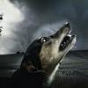 犬の無駄吠え、鳴き…の画像