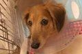 犬の血流障害 ダッ…の画像