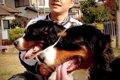 愛犬の怖がりを治す…の画像