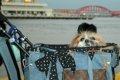ペットバギーのおす…の画像