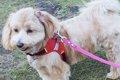 簡単にできる愛犬の…の画像