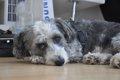 犬の風邪の症状と原…の画像