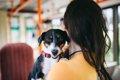 犬と一緒にバスに乗…の画像