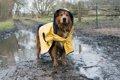 「犬にレインコート…の画像