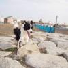 中型犬ボーダーコリ…の画像