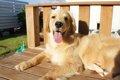 愛犬にラム肉をあげ…の画像