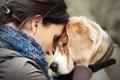 老犬介護の問題~1人…の画像
