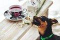 犬が中毒症状を起こ…の画像