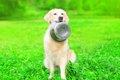 愛犬がごはんを食べ…の画像