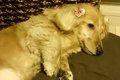 犬の寝言はストレス…の画像