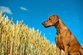 犬の嗅覚の新しい仕…の画像