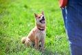 犬を飼う時に飼い主…の画像