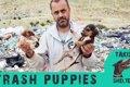 ゴミの中の子犬たち…の画像