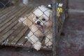 動物虐待の逮捕者が…の画像
