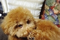 犬のストレスサイン…の画像
