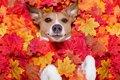 保護犬の譲渡率をア…の画像
