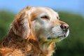犬の老化のサインを…の画像