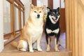 和犬の6種の天然記念…の画像