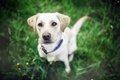 愛犬と旅行を楽しむ…の画像