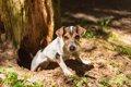 狩猟犬は遭遇した動…の画像