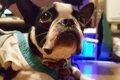 愛犬を看取れなかっ…の画像