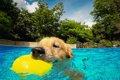 愛犬とドッグプール…の画像