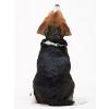 犬のお留守番、上手…の画像