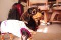 私が犬を飼っていて…の画像