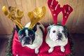 もうすぐクリスマス…の画像