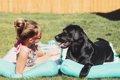 犬に日差しを浴びさ…の画像