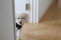 愛犬との遊び方♪室内…の画像