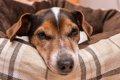 犬のタマネギ中毒に…の画像