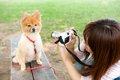 ウチの子をモデル犬…の画像