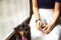 犬の順位づけ行動に…の画像