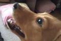 愛犬に合った口腔ジ…の画像