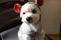 犬のかわいいお洋服…の画像