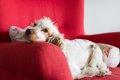 愛犬の「いつもと違…の画像