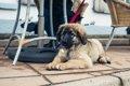 福岡県の犬と一緒に…の画像