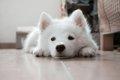 【これから子犬を飼…の画像