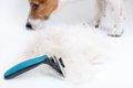 犬の換毛期に役立つ…の画像