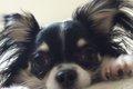 老犬の介護。目が見…の画像