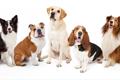 犬の性格は種類で全…の画像