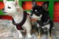 犬の耳ダニの特徴や…の画像