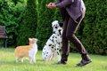愛犬が嫉妬する5つ…の画像