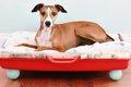 犬用ベッドDIY11選!…の画像