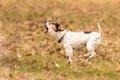犬が飼い主以外に吠…の画像