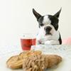 愛犬が急にご飯を食…の画像