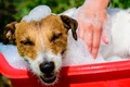 犬を炭酸泉に入れる…の画像
