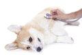 冬本番。愛犬のヒー…の画像